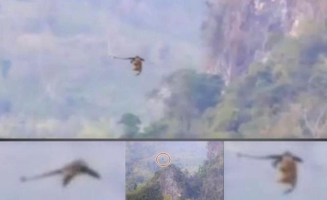 drago-volante-avvistato-in-cina-ottobre-2016-foto-2