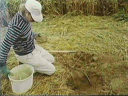 GRASDORF CROP CIRCLE E IL MISTERO DELLE PLACCHE DI METALLO 21 luglio 1991 foto 1