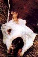 MUTILAZIONI ANIMALI MISTERIOSE M.A.M.