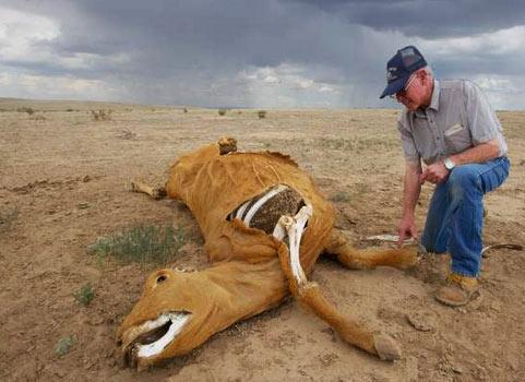 MUTILAZIONI ANIMALI L'FBI INDAGA