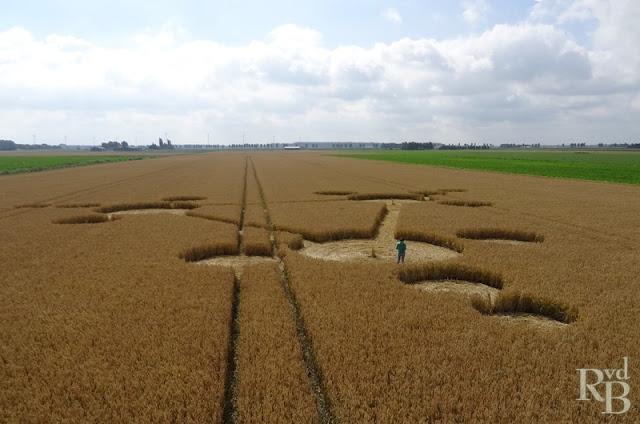 cerchio nel grano olanda localita' di standdaarbuiten vicino oudenbosch FOTO 230-31 luglio 2013